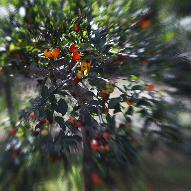 #lensbaby #autumn #beauty #malcolmkingswell.com #apple