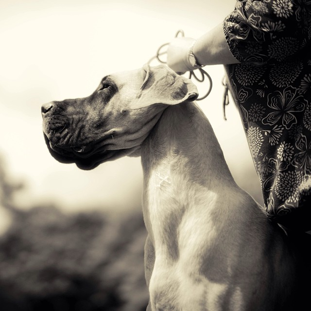#dog #dog show #malcolmkingswell #monochrome
