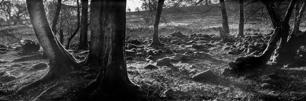 Llangatock Ancient Wood 1.jpg