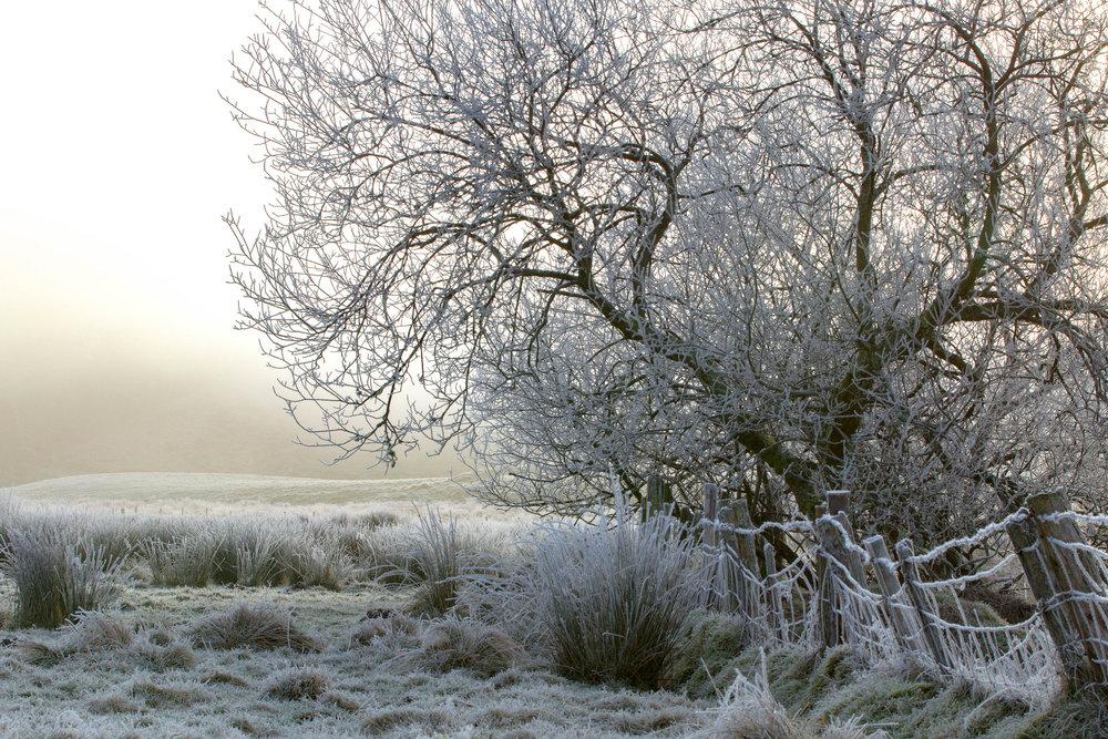 Hoar Frost.jpg