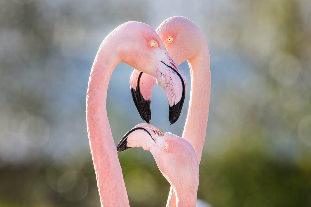 Three eyes in Flamingo