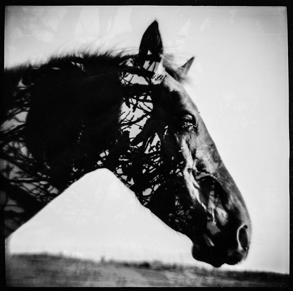 Pouva Horse Double.jpg