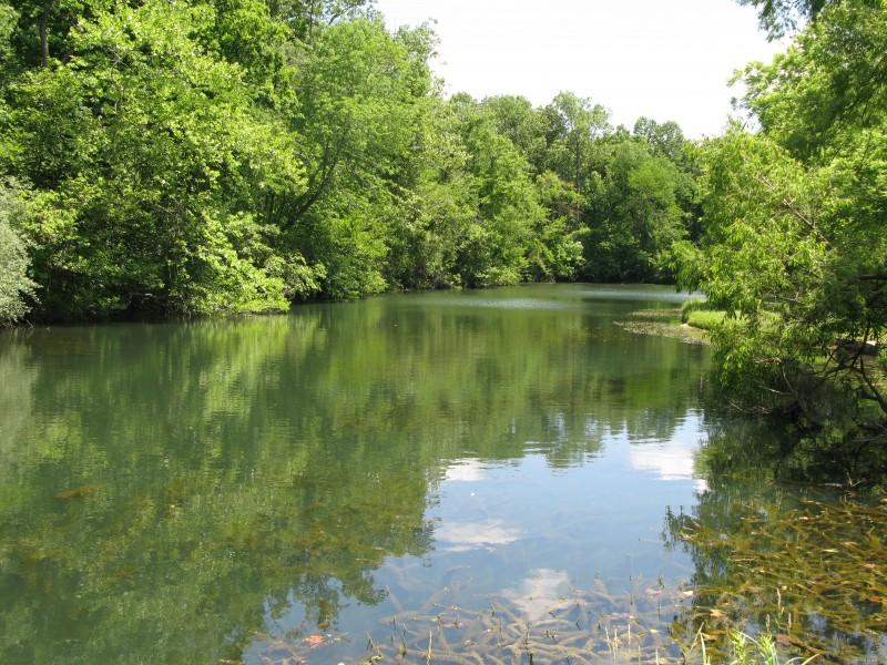 Pond-2-800x600.jpg