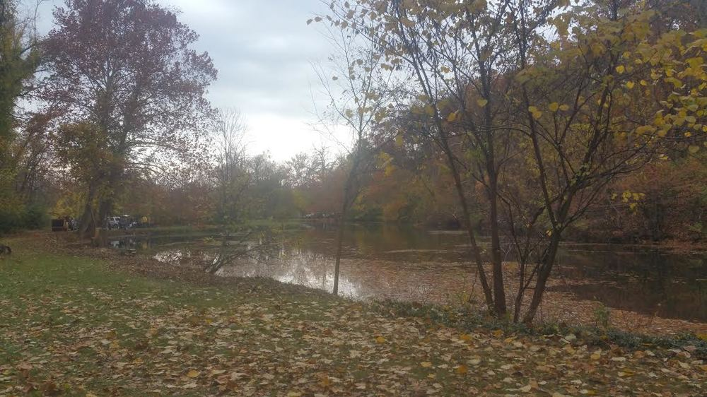 Pond 1 Overgrowth Cleared.jpg
