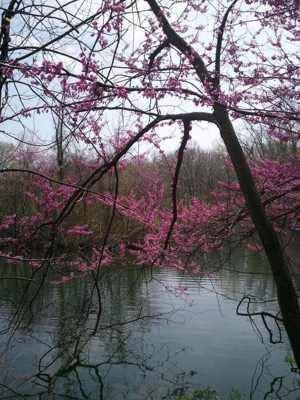 Pretty Pond.jpg