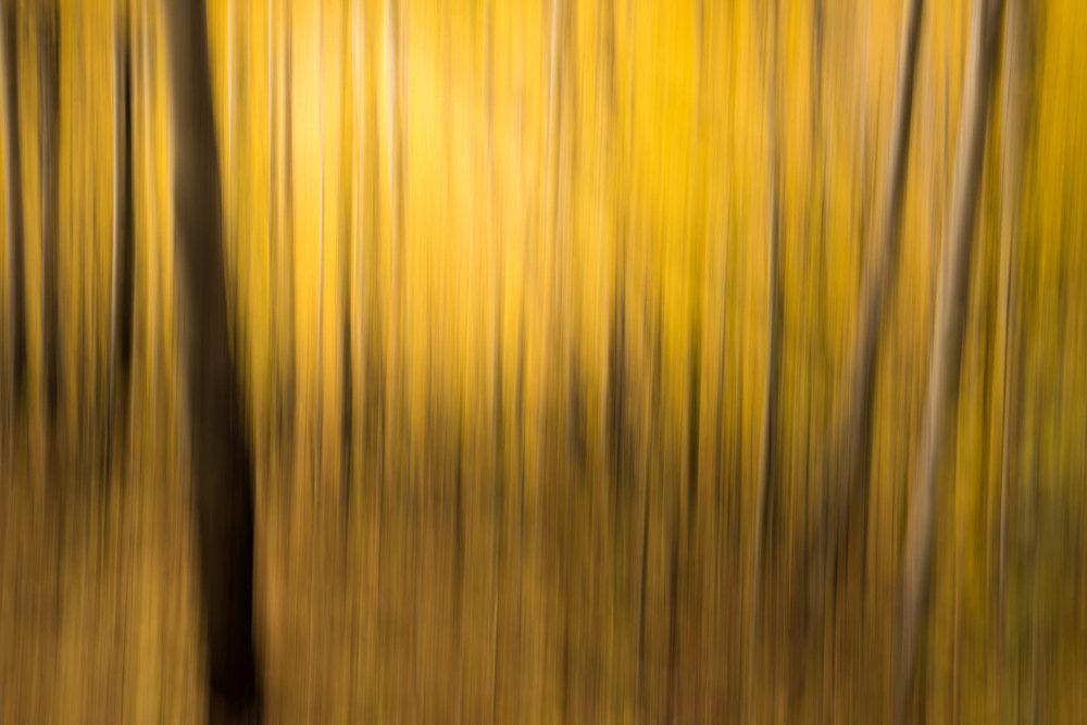 Aspen-Lines-2.jpg