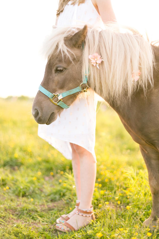 428-nova-scotia-horse-photography.jpg