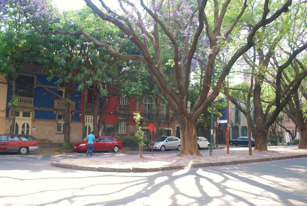condesa street.JPG