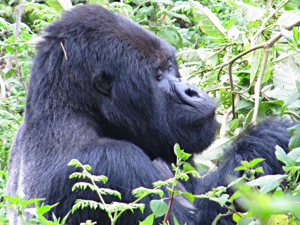 Rwanda, photo by Lori Toledano