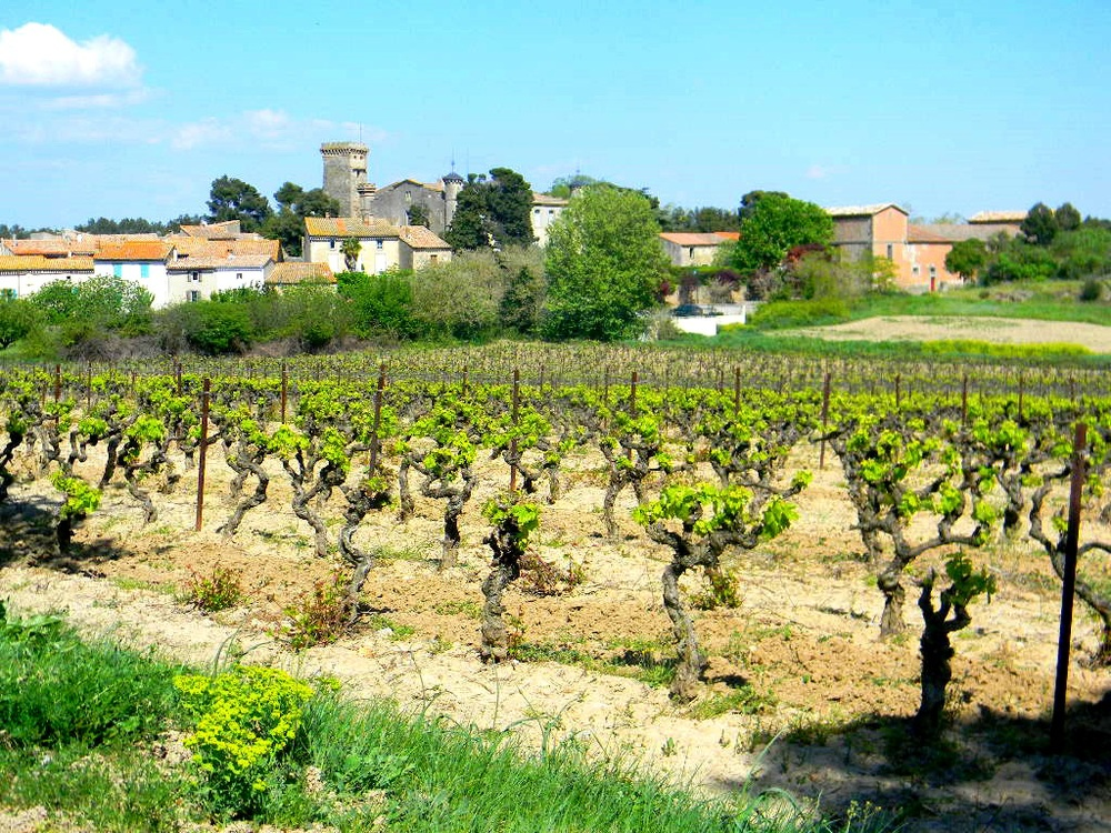 Wendy Village near Chateu Canet vines.jpg