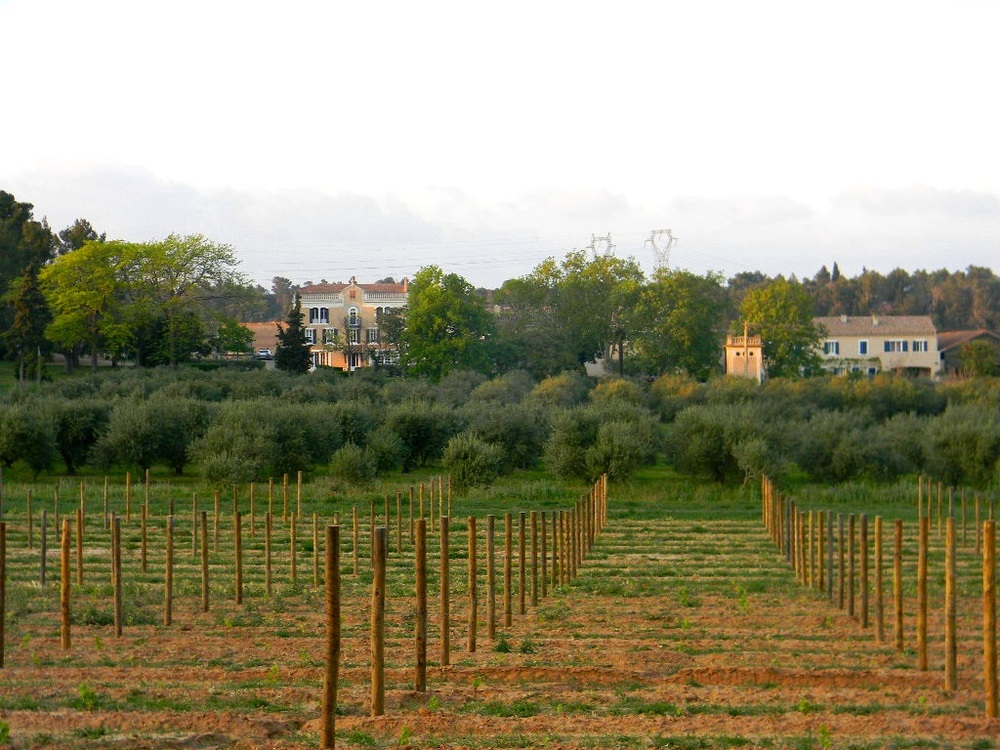 chateau canet Wendy view of apartments.jpg