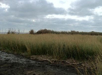 nola_wetlands