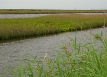 gulf_wetlands_grand_isle
