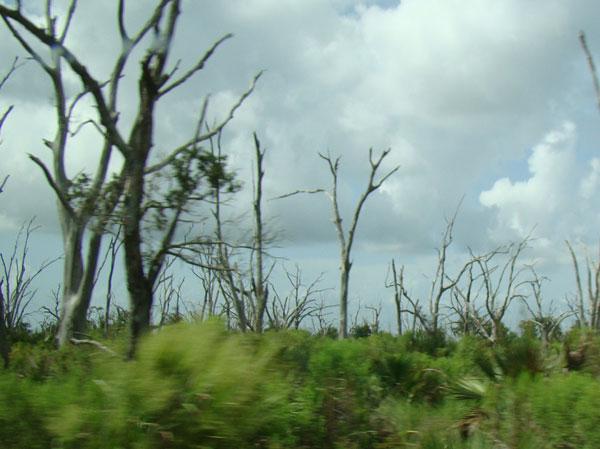 no_wetlands_trees