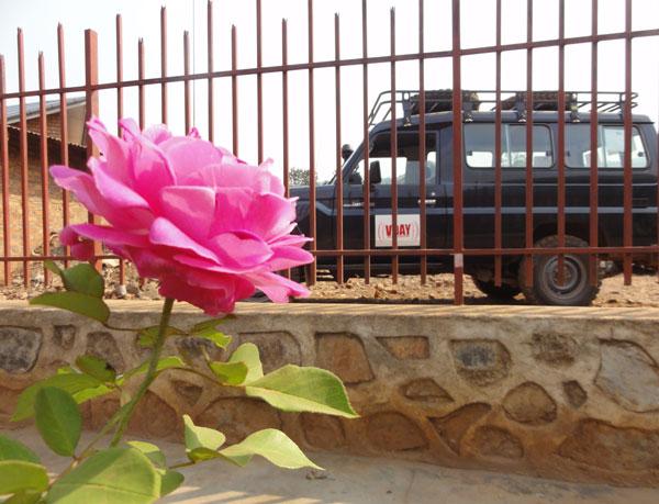congo_rose_vday_vehicle