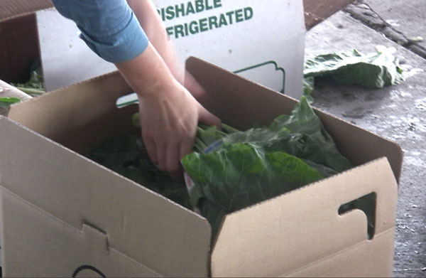 corr_vineland_lily_packing_collards_box