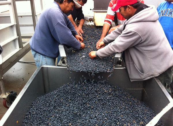 wine_sorting