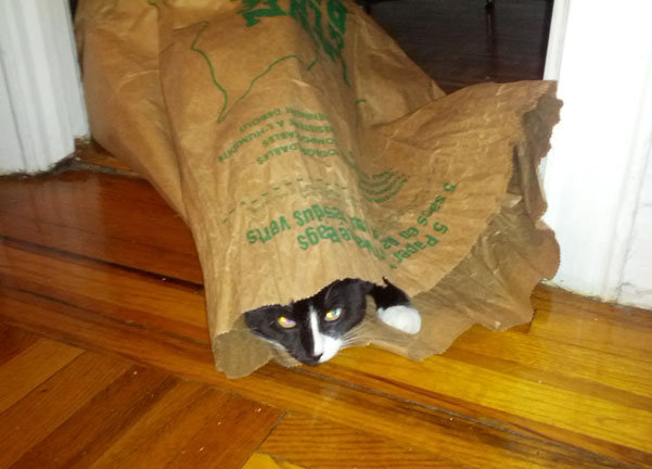 corr_cat_compostable_bag