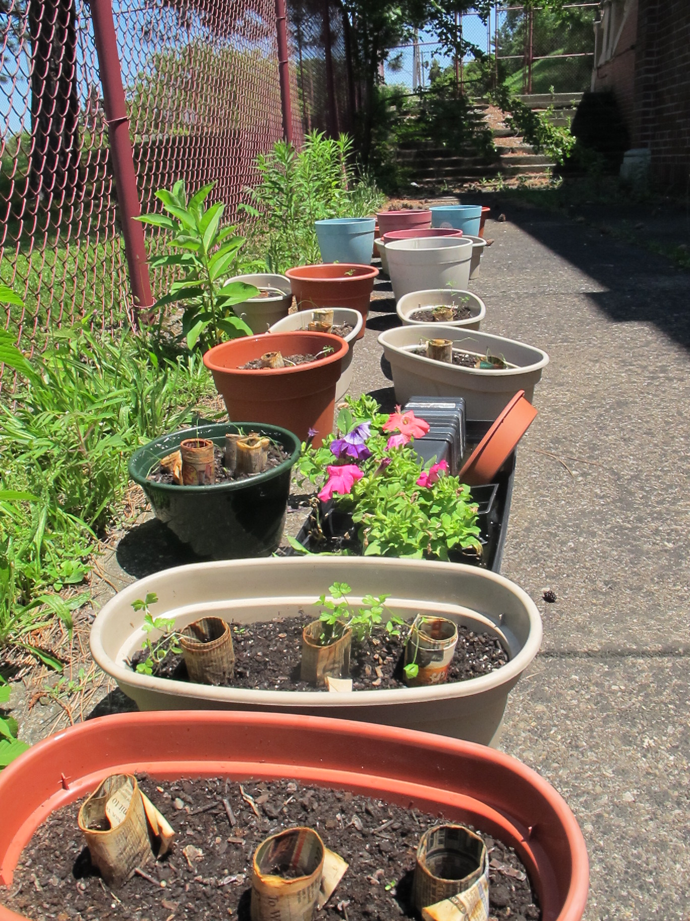 current potted plants