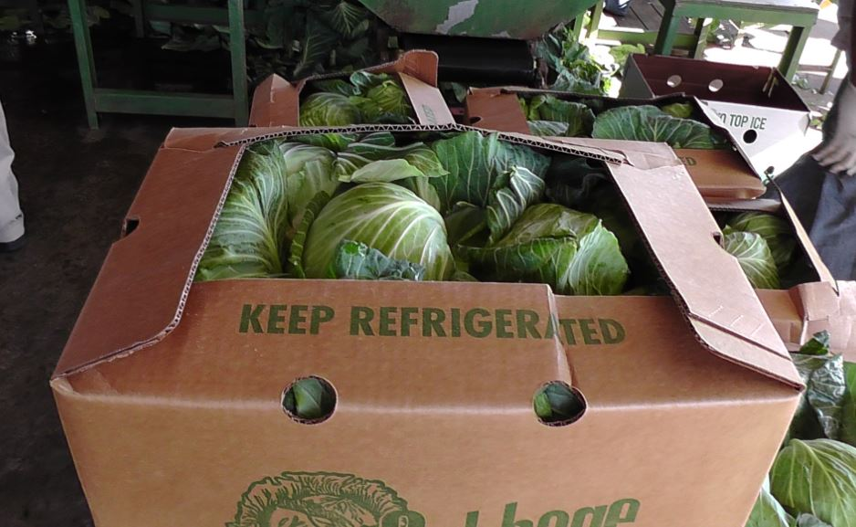 Cabbage-in-box1