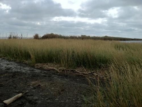 Thriving new wetlands plants