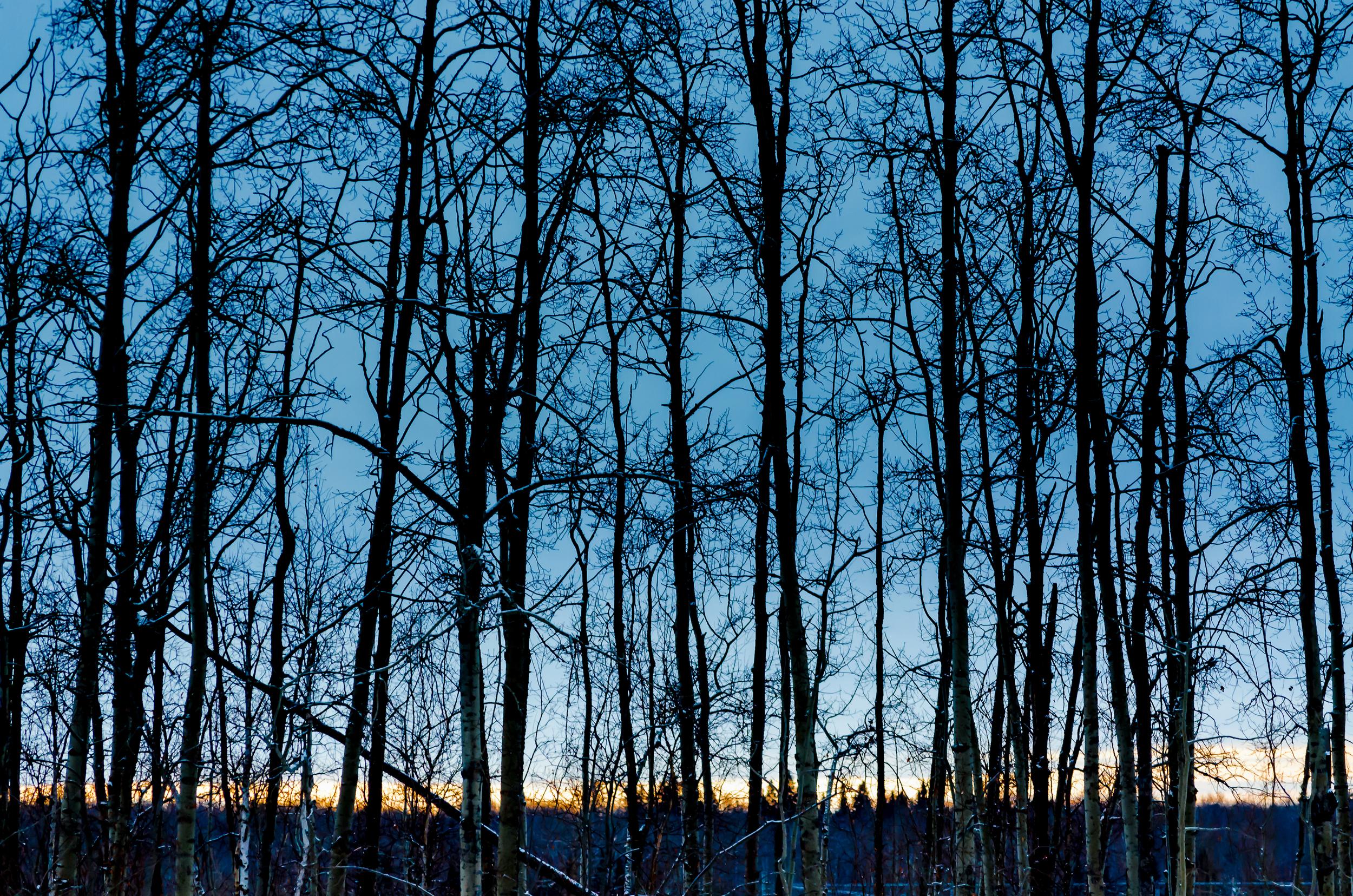 Nakumun Winter Trees-0134