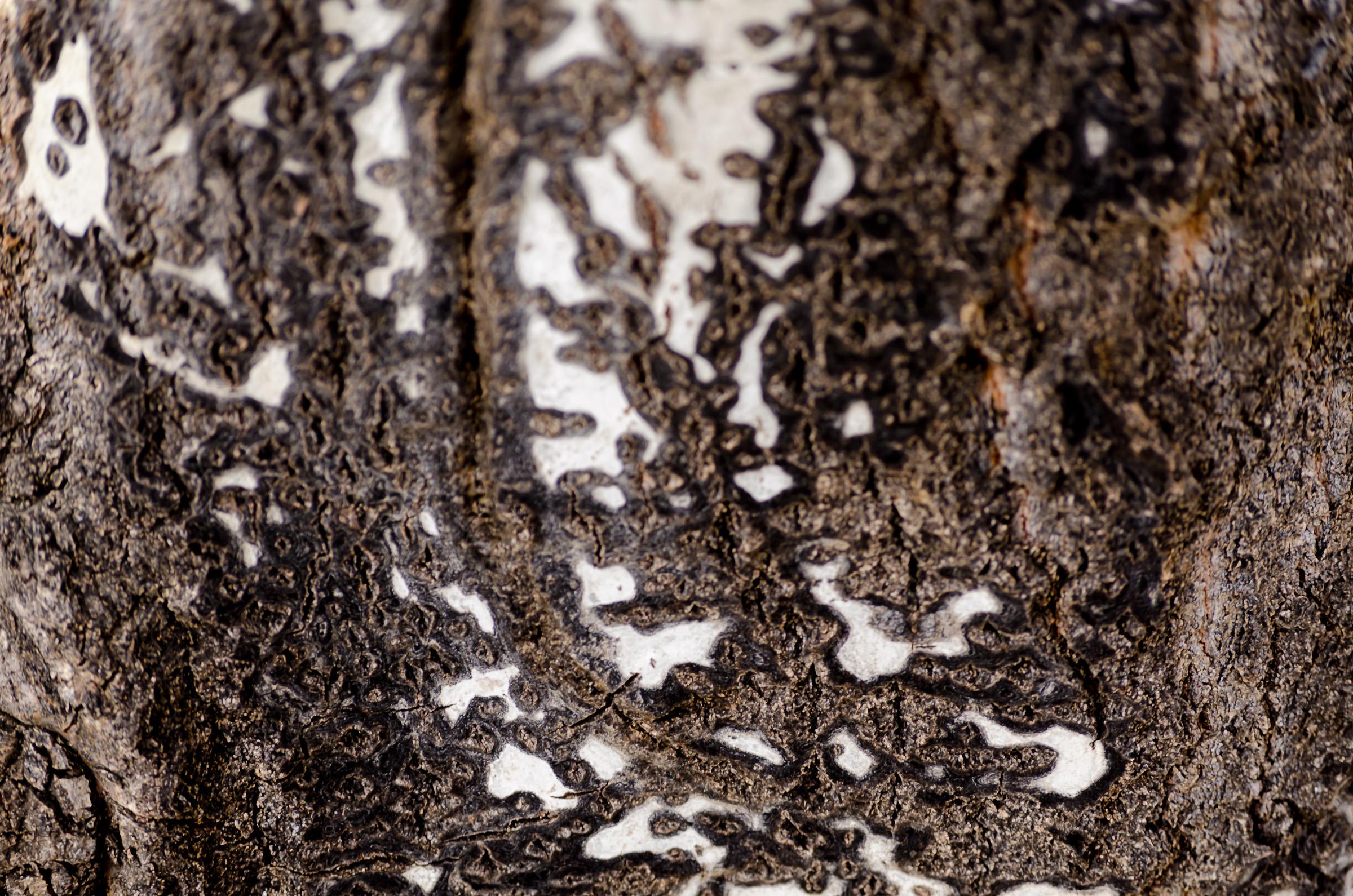 Tree bark-0040