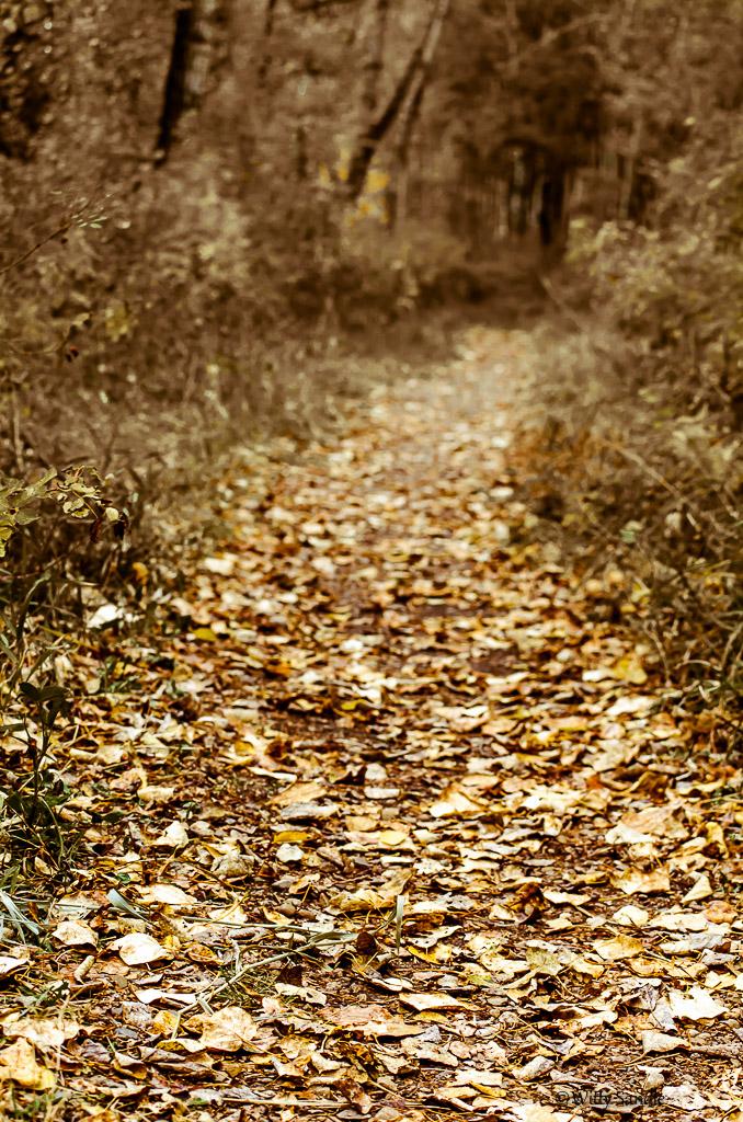 Golden Pathway-4159