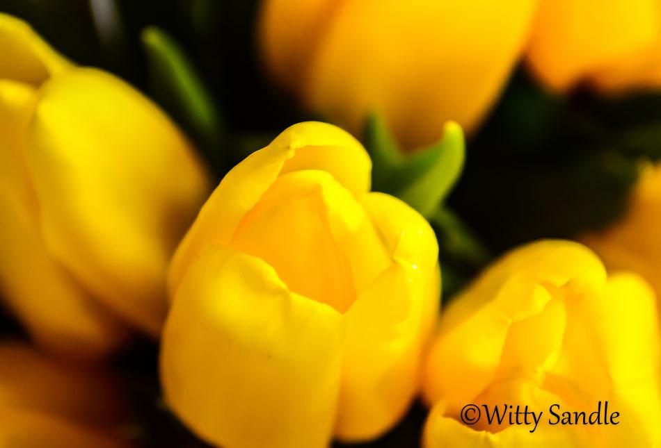 Yellow Delight-5259