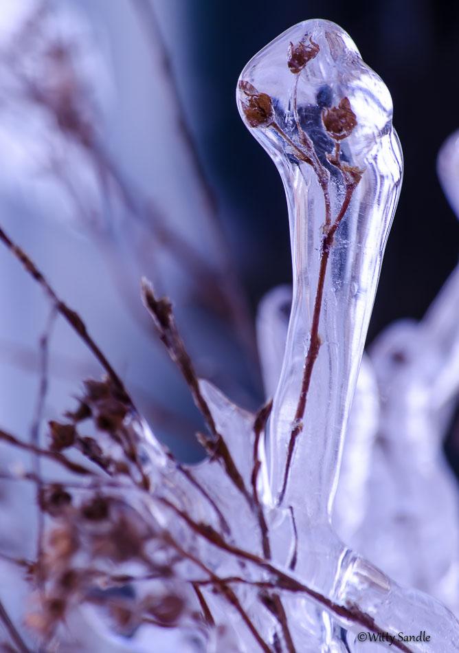 Frozen-5416