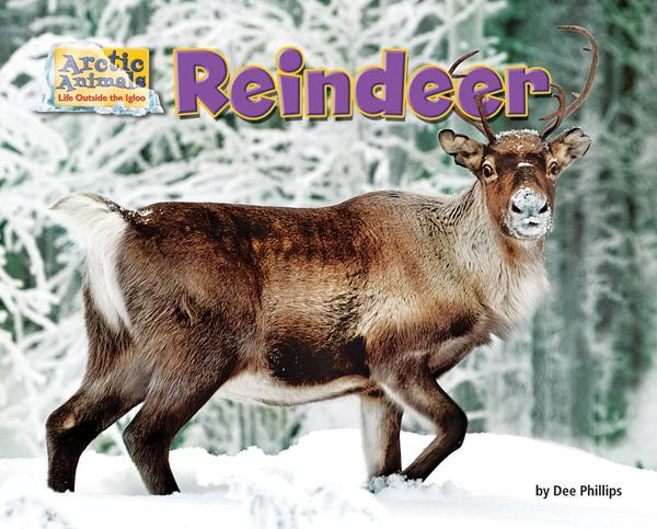 Arctic Animals: Reindeer
