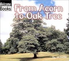From Acorn to Oak Tree.jpg