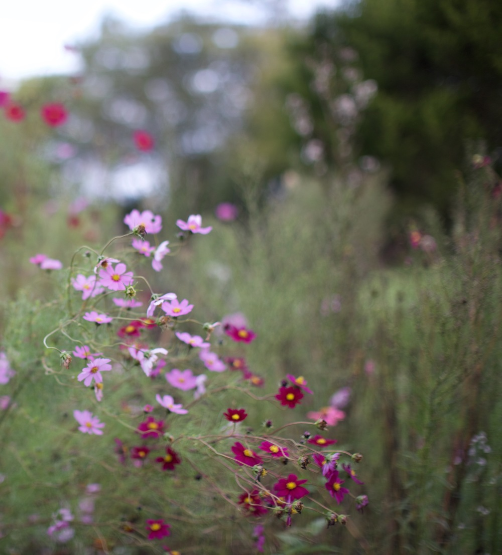 Flowers in the scattering garden, an area for people to scatter cremated remains.  Photo by Anna Rutenbeck.