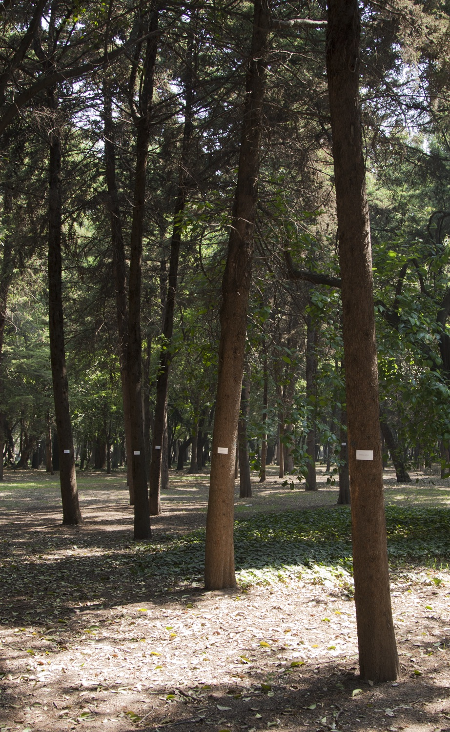 bosque 1 copia.jpg