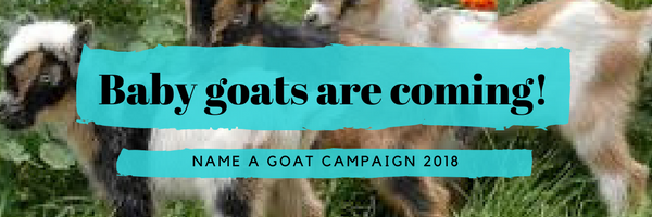 baby goats are coming.png