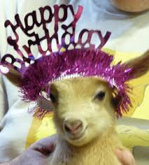 baby goat party2.jpg