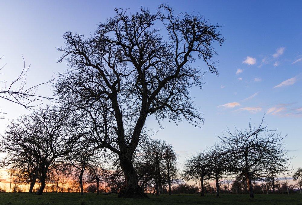Tree cider manonfldn