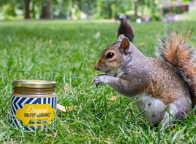 🇬🇧 Oh, we've got a new fan! 🐿  Like this cute squirrel, we count on you to take some delicious MAMIE'S caramel at home 😋 . . 🇫🇷 Tiens donc, un nouveau fan ! 🐿  Comme ce petit écureuil, on compte sur vous pour emporter à domicile le délicieux caramel maison de MAMIE'S 😋 . . #MAMIESLondon #London#Restaurant #Caramel #Squirrel #Wild #Cute #Écureuil