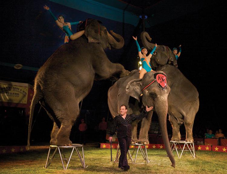 9.-ELEPHANTS.jpg