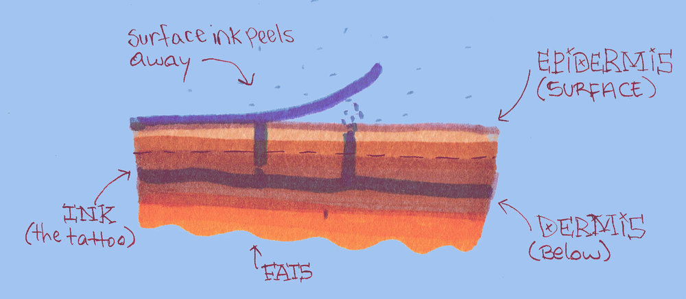 All ink that's not in the dermis layer is shed. Dermis ink stays and can be seen through the transparent skin cells of the epidermis.
