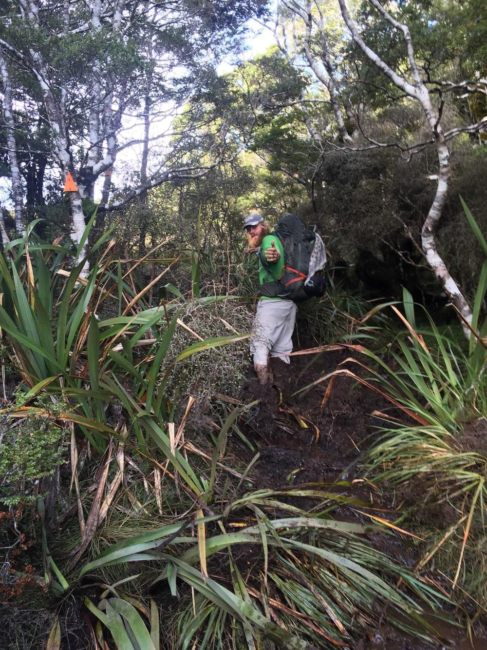 Welcome to the Te Araroa Jungle