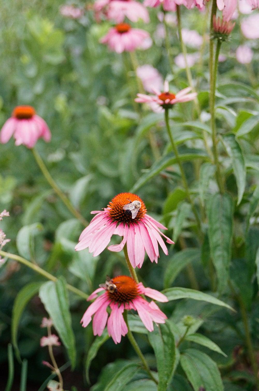 Spring_Botanical_Gardens_film_2015.jpg