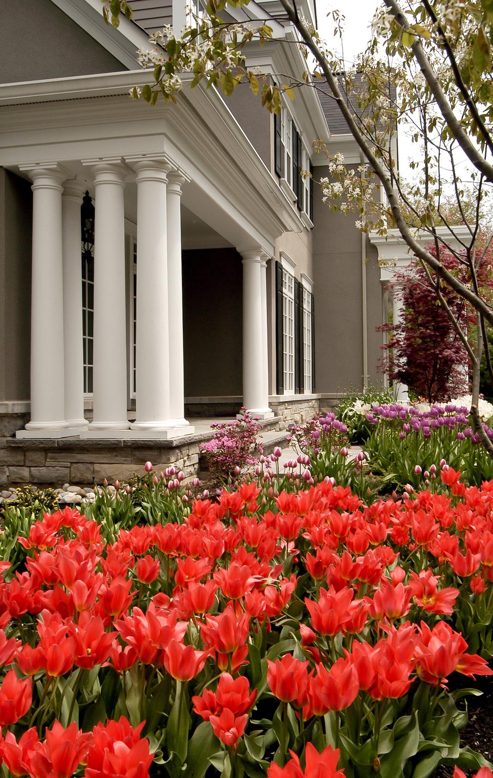 20030528-tulips.jpg