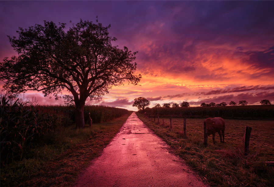 Long-pink-road-copy-2.jpg