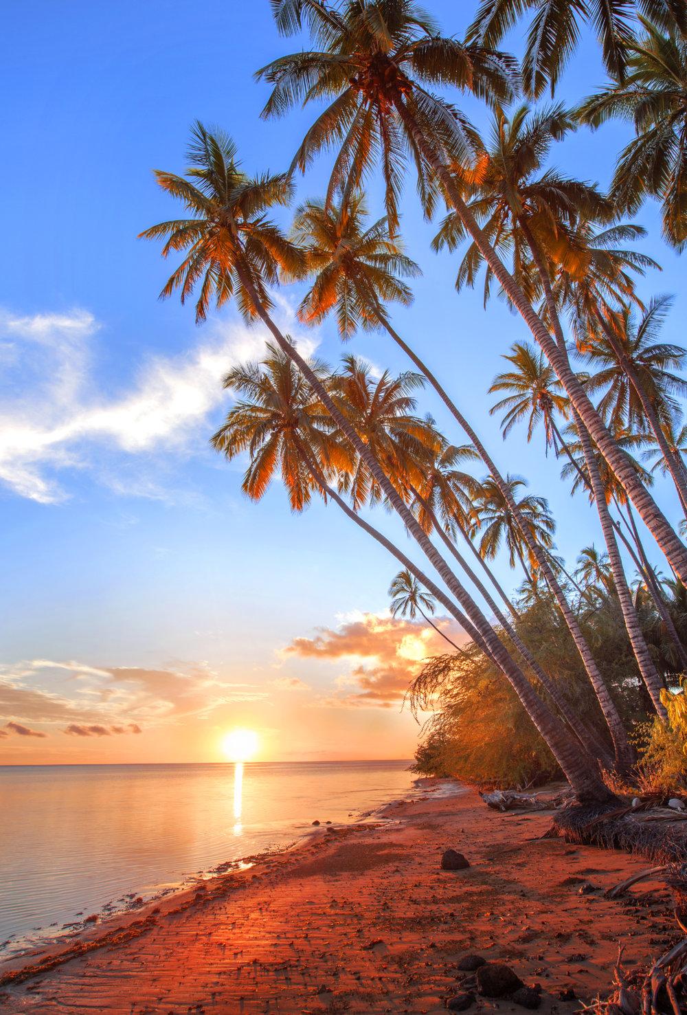 Molokai Palms