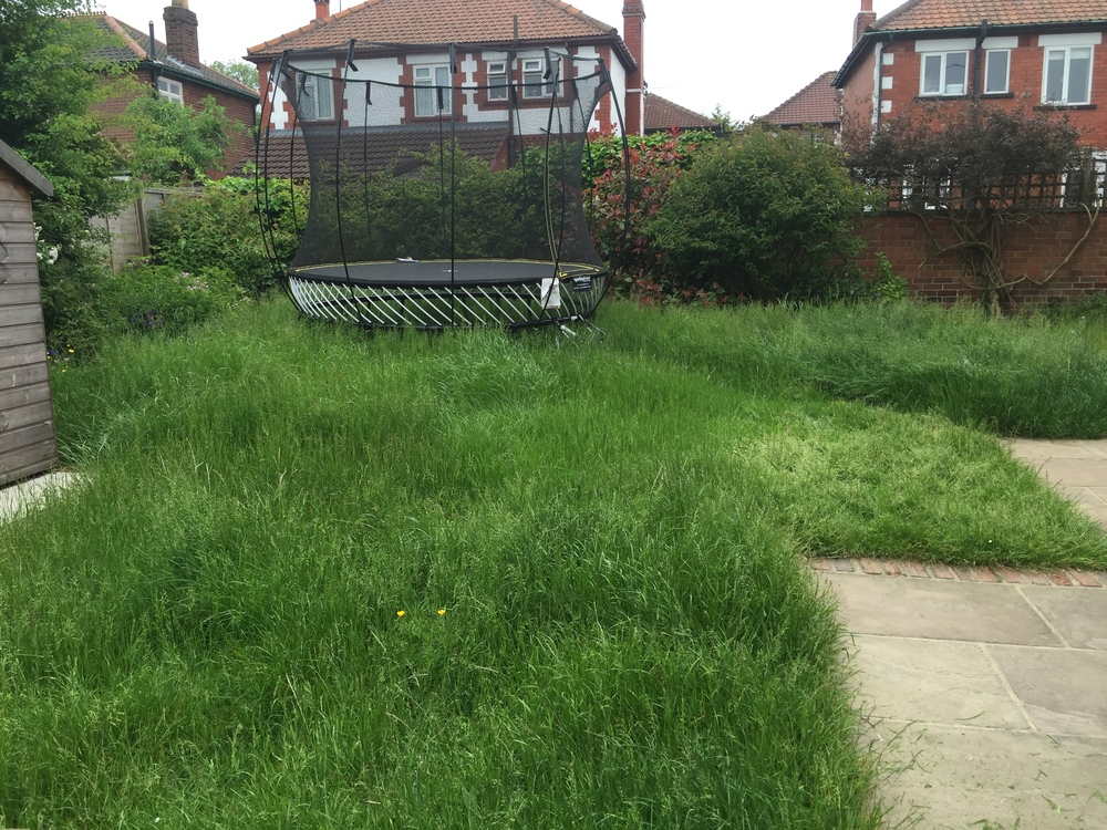 A before photo - this is quite unusual, but sometimes a lawn can run away from you.