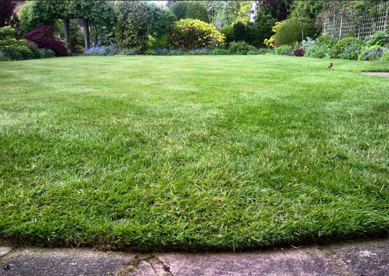A perfect cut lawn -