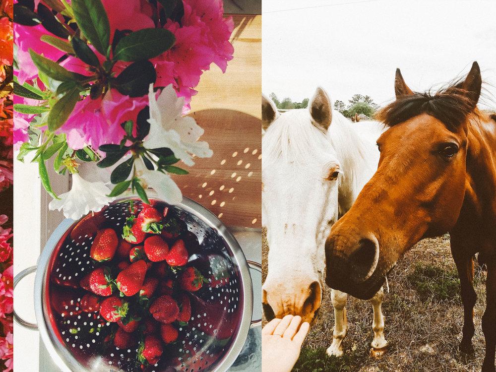 horsessss.jpg