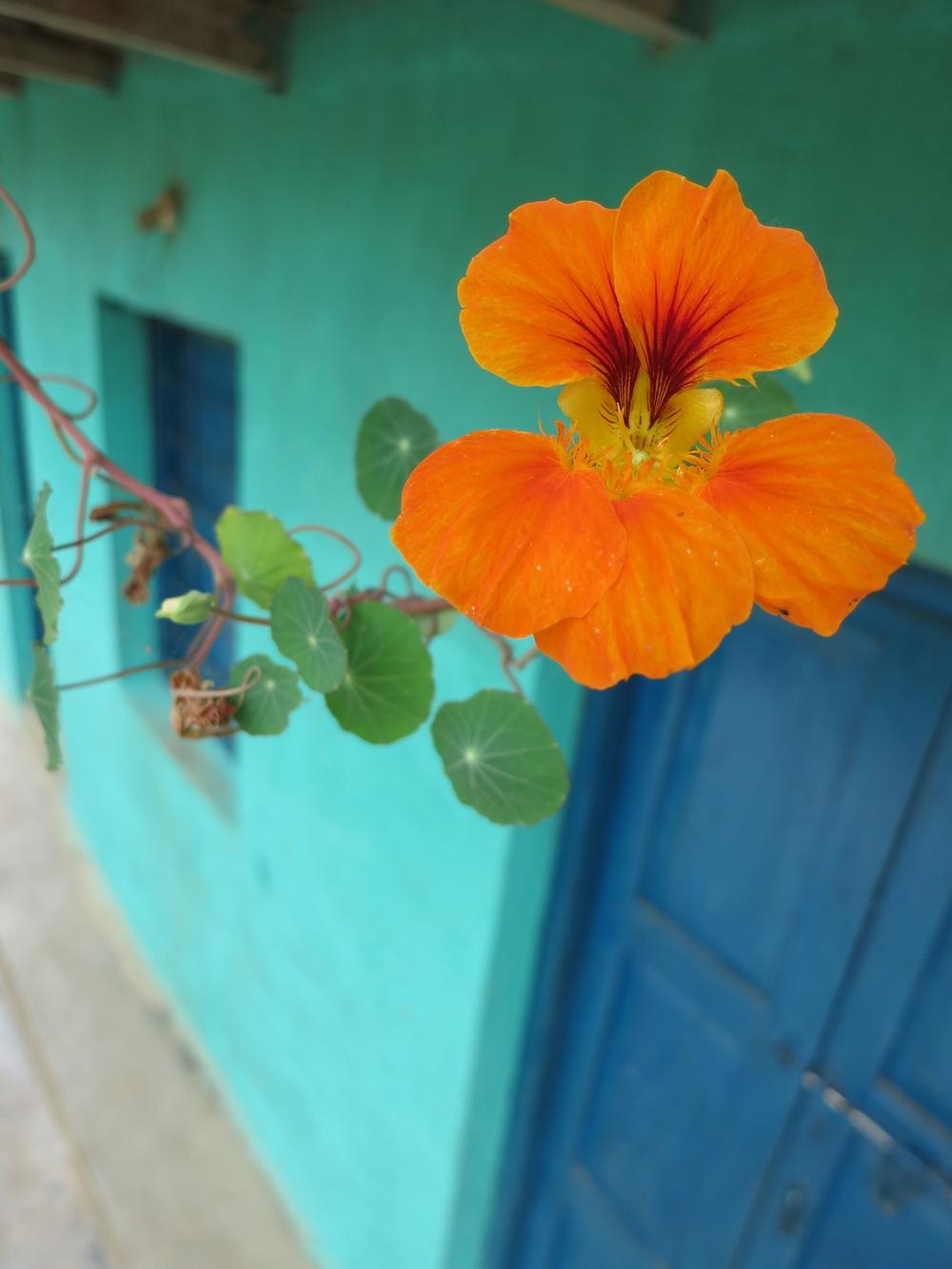 ang_nepal:india_0171.jpg