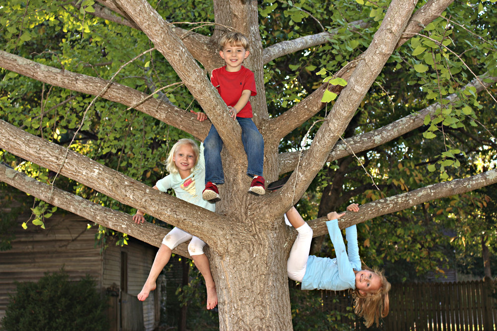 Tree Climbers.jpg
